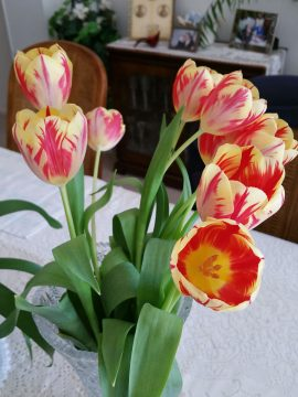 bouquet of Rembrandt Tulips, in a vase on a table