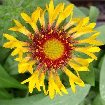 Gallery of Favorite Flower Photos