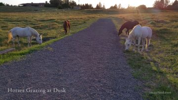 Four horses graze peacefully by the side of the road in a large field at dusk.