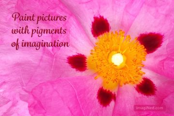 4x6 postcard: macro photo of the pinkish Cistus x purpureus flower overlaid with burgundy script saying Paint Pictures with Pigments of Imagination