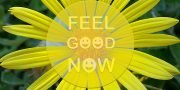 "A bright yellow daisy with the words, ""FEEL GOOD NOW"" (where the three letter ""O"" are replaced with smiley icons) in semi-transparent text overlaying the face of the daisy."