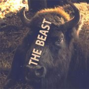 "Backlit Bison in darkened stall, barely lit nostrils flaring with the ""THE BEAST"" text overlaying the center-line of the head."