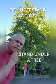 A fifty foot tall liquid amber tree stands off in the distance, bottom half shaded, top half in bright sunlight. In the foreground, a man (Ned Buratovich) leans into the frame, his hand at his chin, as if pondering. Back in the distance, the same man is seen standing underneath the tree, next to its trunk.