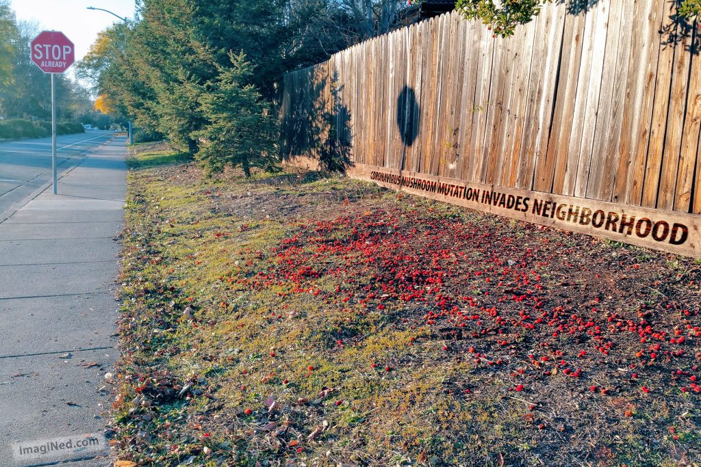 Hundreds of golf-ball sized red orbs with spikey exteriors litter the ground next to a withered wooden fence in the setting sunlight.