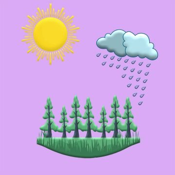 Three part cartoon graphic showing sun brightly beaming, dark clouds raining, verdant forest growing.