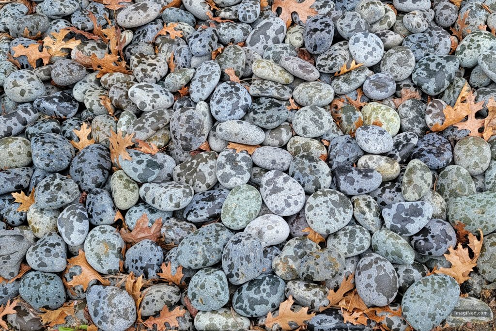 In the frame are a score of fist-sized, river rocks and a scattering of dried oak leaves, all polka-dotted with the first droplets of a rain-shower.