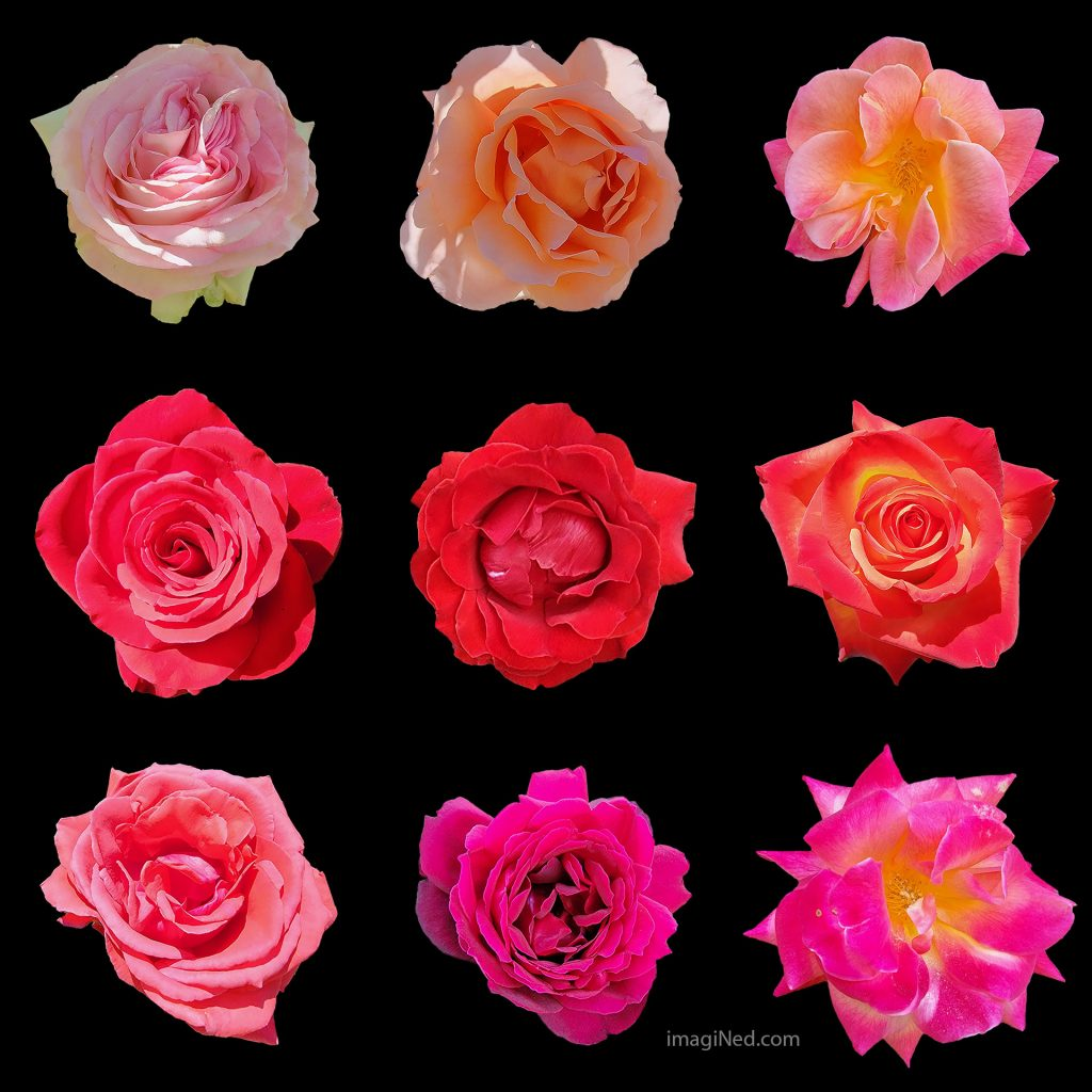 Against a black background, sits a 3 by 3 grid of rose blossoms, petals only, with no other parts visible. The roses are in various shades of reds and pink.