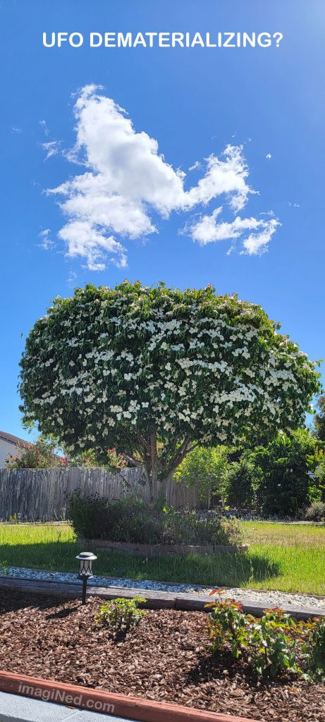 A dogwood tree in full bloom rises from a suburban lawn. Above that floats a very angular and jagged cloud formation, vaguely in the form of a spaceship.