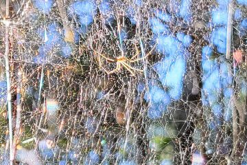 Spider's Web in Psychedelic Sunlight