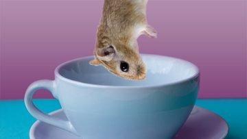Cats Like Gerbil Tea…